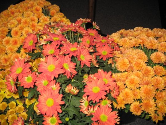 Fall flowers at ECC